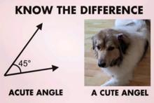 Pets + Panera promotional image